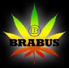 Brabuss